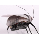 Муха Cute Sunlight Beetle